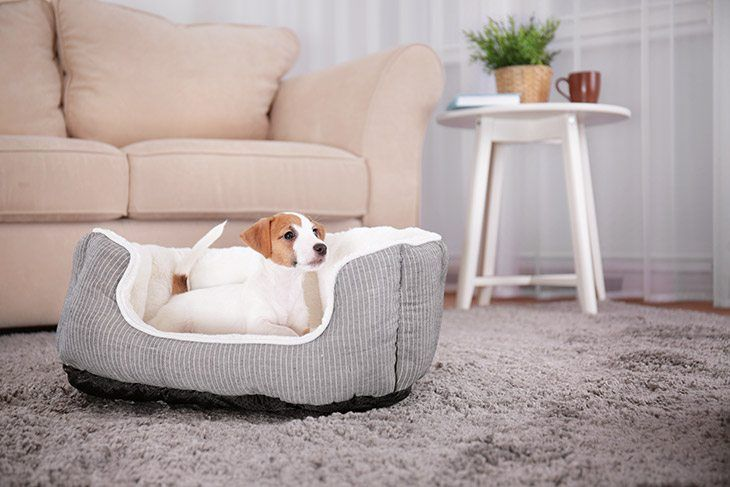best-memory-foam-dog-bed-Reviews